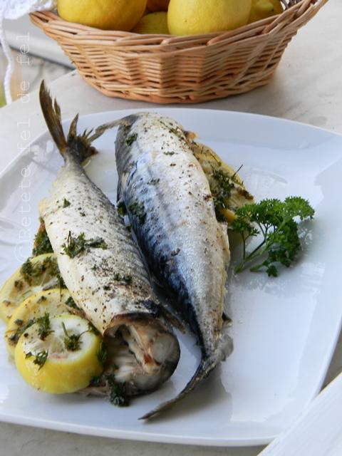 fish-012