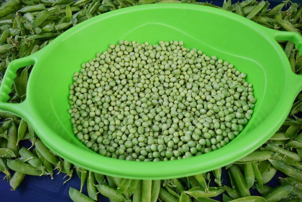 Mazăre recoltată și desfăcută din păstăi într-un vas de plastic